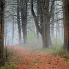 Peaceful path through mist laden trees in Quabbin Reservoir Petersham Ma.