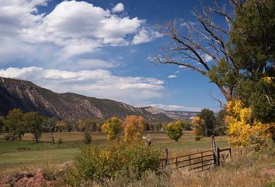 Colorado Mountains and Aspens